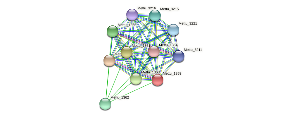 Mettu_1359 protein (Methylobacter tundripaludum) - STRING interaction network