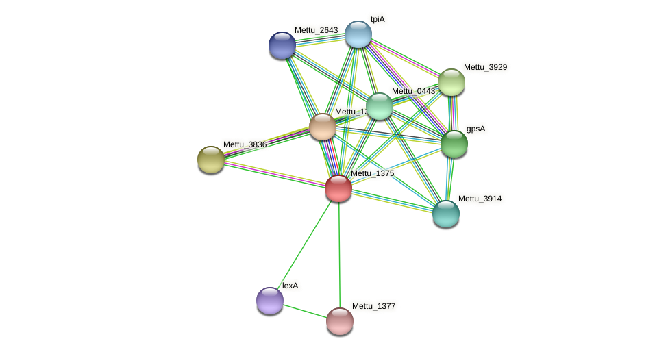 Mettu_1375 protein (Methylobacter tundripaludum) - STRING interaction network