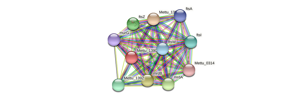 Mettu_1390 protein (Methylobacter tundripaludum) - STRING interaction network