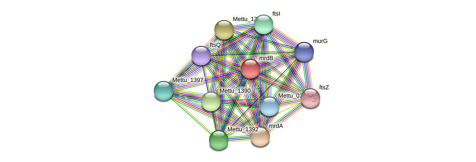 Mettu_1394 protein (Methylobacter tundripaludum) - STRING interaction network
