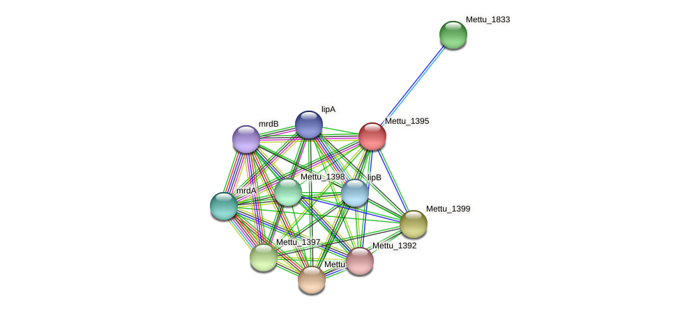 Mettu_1395 protein (Methylobacter tundripaludum) - STRING interaction network