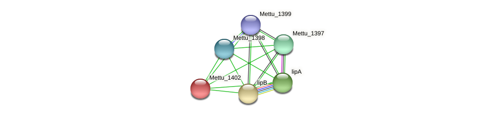 Mettu_1402 protein (Methylobacter tundripaludum) - STRING interaction network