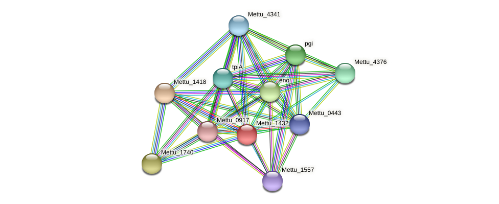 Mettu_1432 protein (Methylobacter tundripaludum) - STRING interaction network