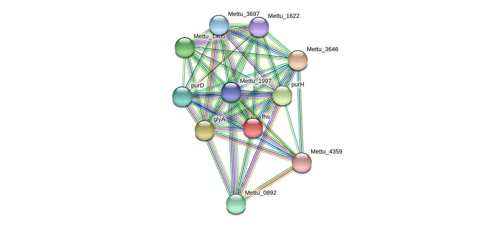 fhs protein (Methylobacter tundripaludum) - STRING interaction network