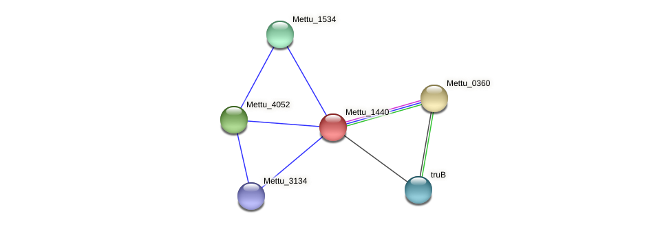 Mettu_1440 protein (Methylobacter tundripaludum) - STRING interaction network