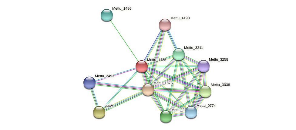 Mettu_1485 protein (Methylobacter tundripaludum) - STRING interaction network