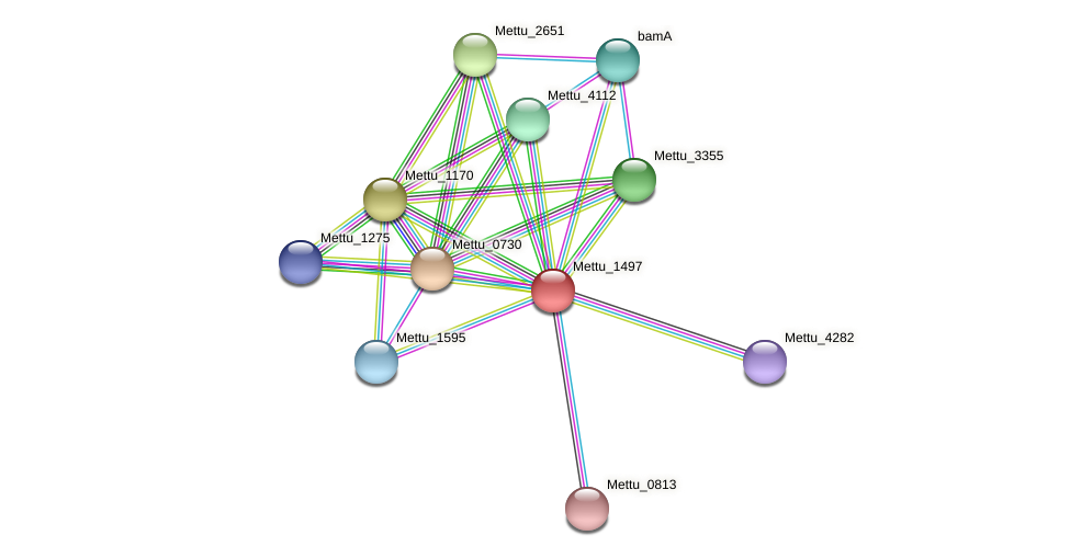 Mettu_1497 protein (Methylobacter tundripaludum) - STRING interaction network