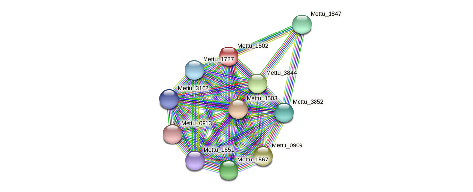Mettu_1502 protein (Methylobacter tundripaludum) - STRING interaction network