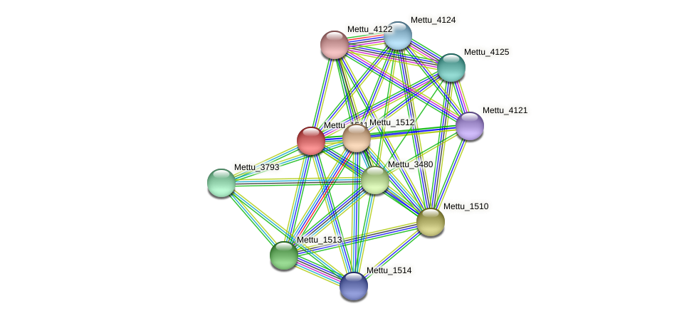Mettu_1511 protein (Methylobacter tundripaludum) - STRING interaction network