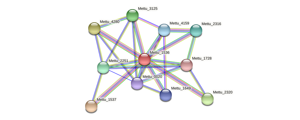Mettu_1536 protein (Methylobacter tundripaludum) - STRING interaction network