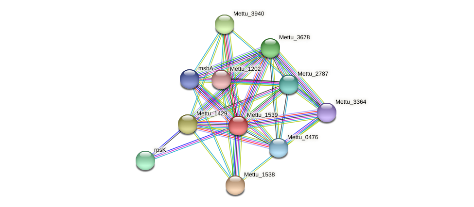 Mettu_1539 protein (Methylobacter tundripaludum) - STRING interaction network