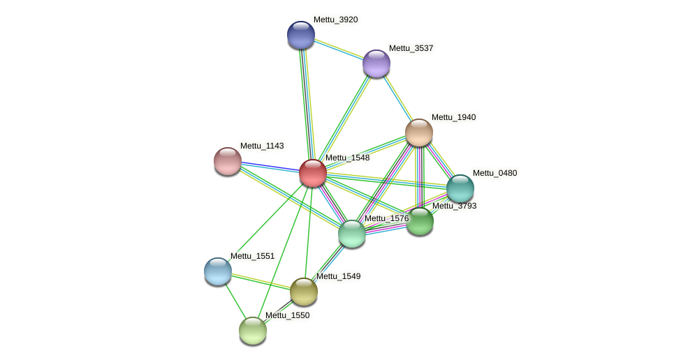 Mettu_1548 protein (Methylobacter tundripaludum) - STRING interaction network