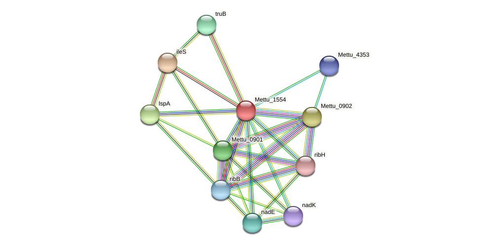 Mettu_1554 protein (Methylobacter tundripaludum) - STRING interaction network