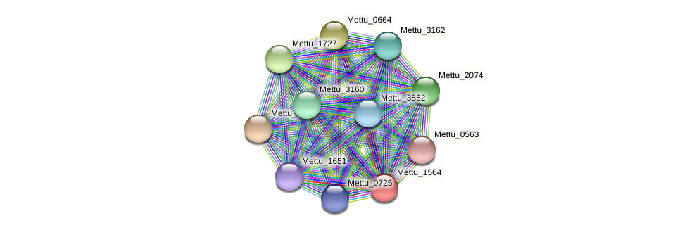 Mettu_1564 protein (Methylobacter tundripaludum) - STRING interaction network