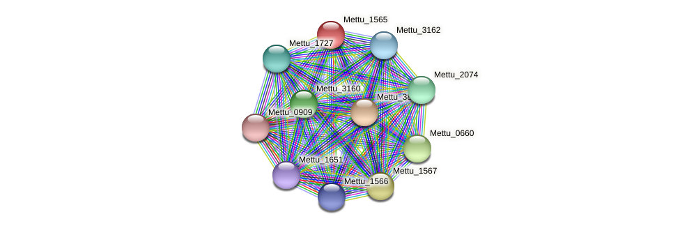 Mettu_1565 protein (Methylobacter tundripaludum) - STRING interaction network