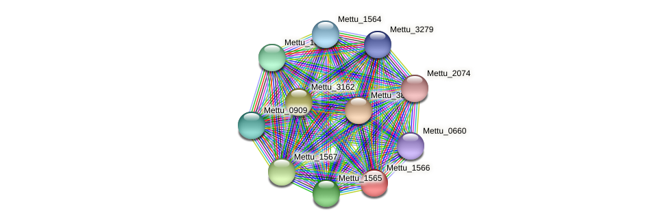 Mettu_1566 protein (Methylobacter tundripaludum) - STRING interaction network