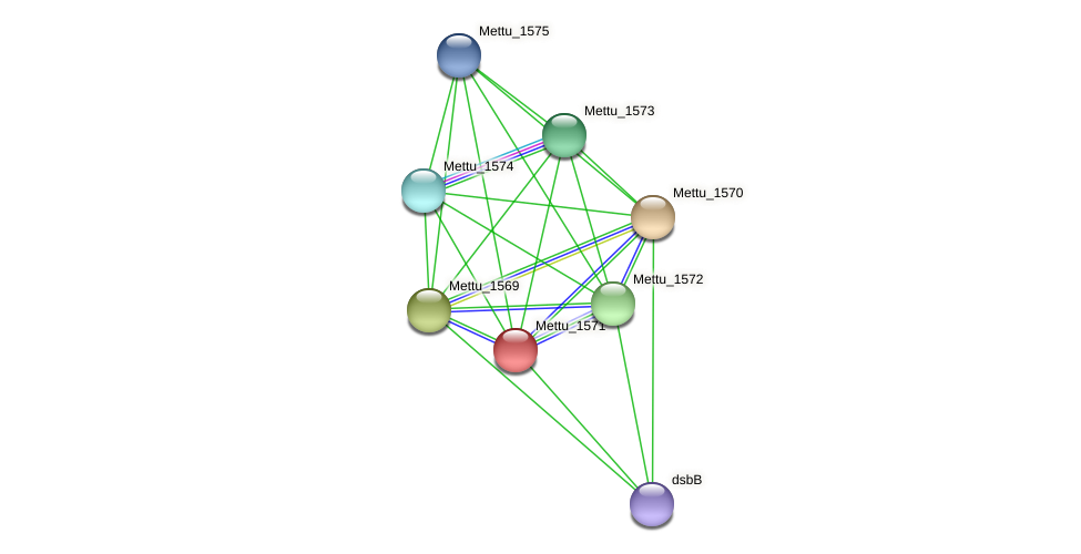 Mettu_1571 protein (Methylobacter tundripaludum) - STRING interaction network