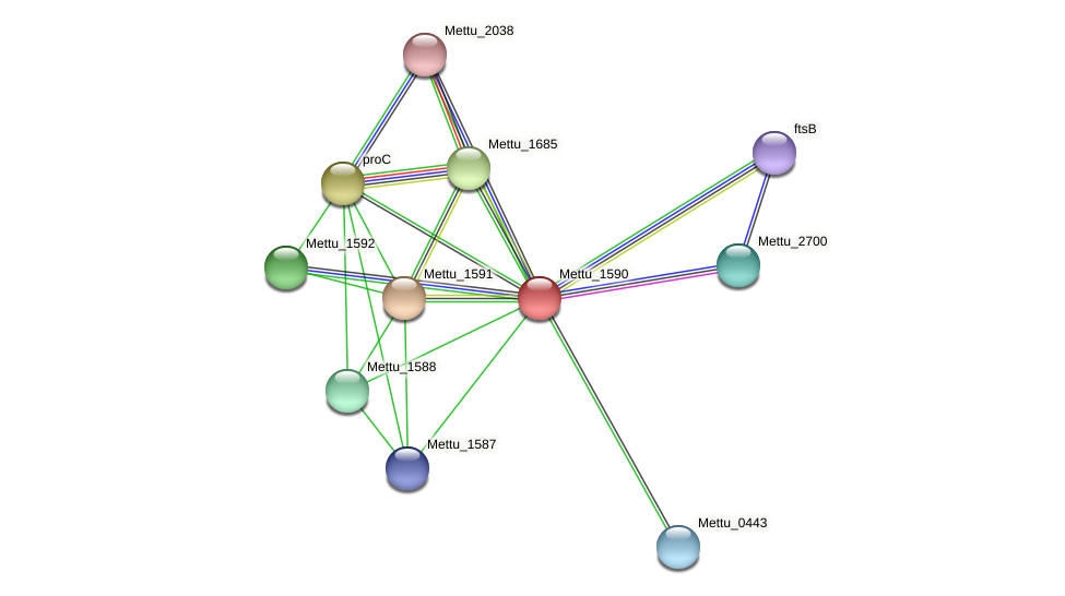 Mettu_1590 protein (Methylobacter tundripaludum) - STRING interaction network