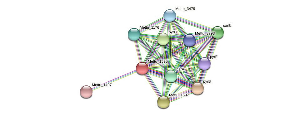 Mettu_1595 protein (Methylobacter tundripaludum) - STRING interaction network