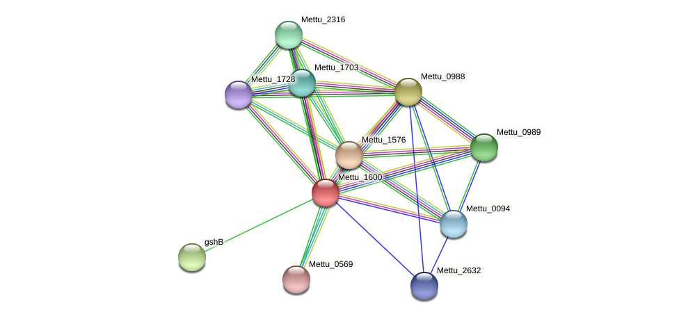 Mettu_1600 protein (Methylobacter tundripaludum) - STRING interaction network