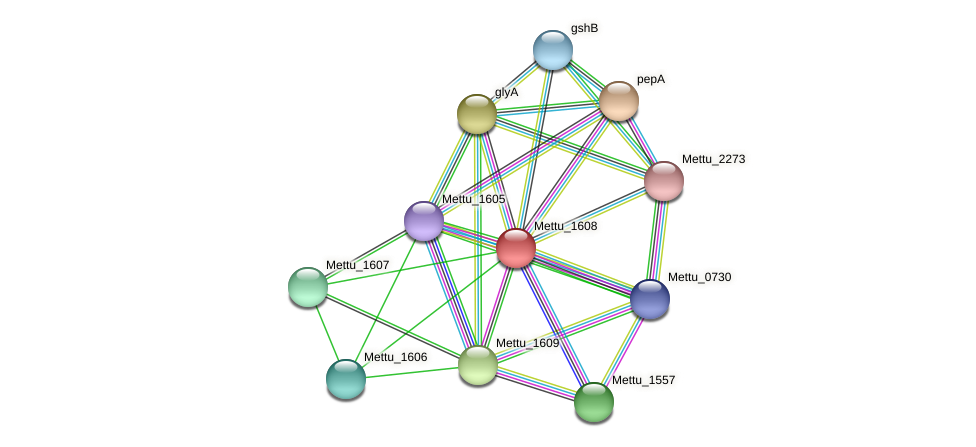 Mettu_1608 protein (Methylobacter tundripaludum) - STRING interaction network