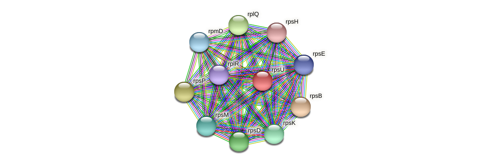rpsU protein (Methylobacter tundripaludum) - STRING interaction network