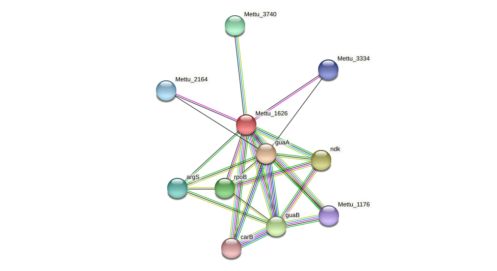 Mettu_1626 protein (Methylobacter tundripaludum) - STRING interaction network