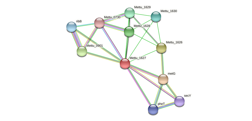 Mettu_1627 protein (Methylobacter tundripaludum) - STRING interaction network