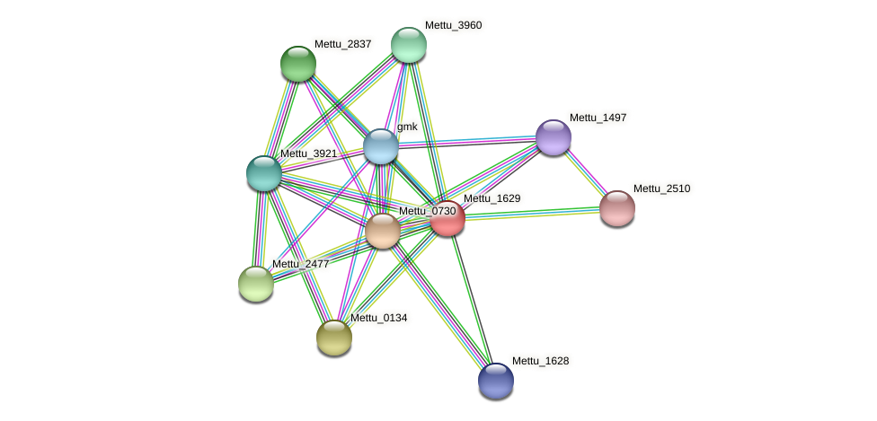 Mettu_1629 protein (Methylobacter tundripaludum) - STRING interaction network