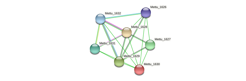 Mettu_1630 protein (Methylobacter tundripaludum) - STRING interaction network