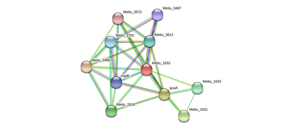 Mettu_1632 protein (Methylobacter tundripaludum) - STRING interaction network