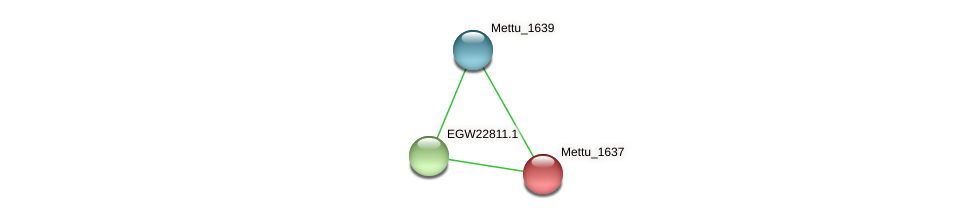 Mettu_1637 protein (Methylobacter tundripaludum) - STRING interaction network