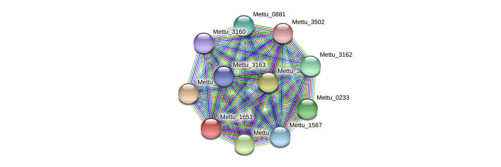 Mettu_1651 protein (Methylobacter tundripaludum) - STRING interaction network