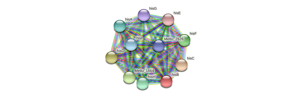 hisB protein (Methylobacter tundripaludum) - STRING interaction network