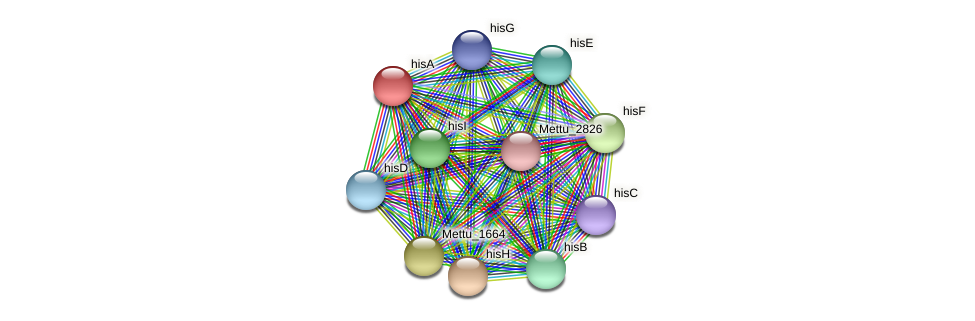 hisA protein (Methylobacter tundripaludum) - STRING interaction network