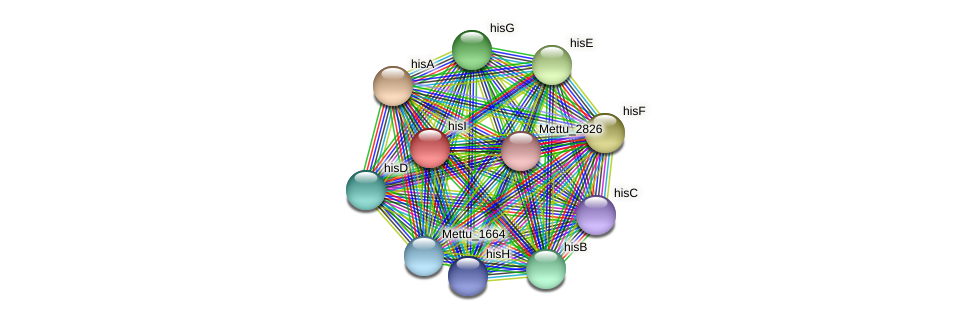 hisI protein (Methylobacter tundripaludum) - STRING interaction network
