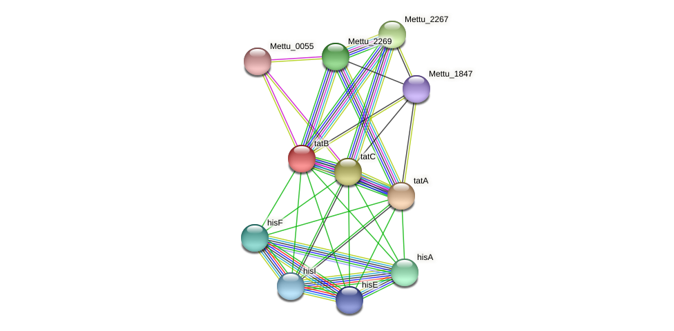 tatB protein (Methylobacter tundripaludum) - STRING interaction network