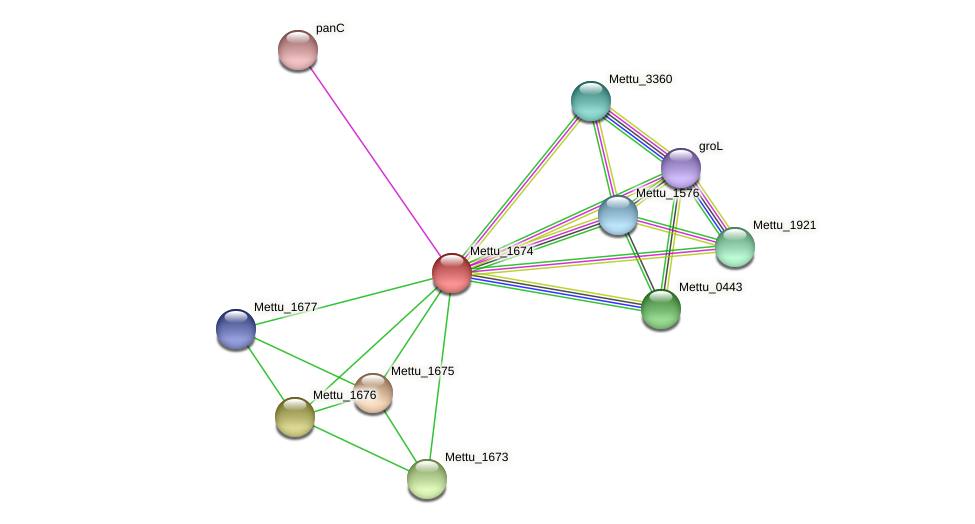 Mettu_1674 protein (Methylobacter tundripaludum) - STRING interaction network