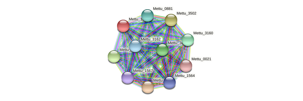 Mettu_1700 protein (Methylobacter tundripaludum) - STRING interaction network
