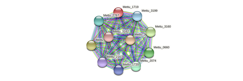 Mettu_1719 protein (Methylobacter tundripaludum) - STRING interaction network