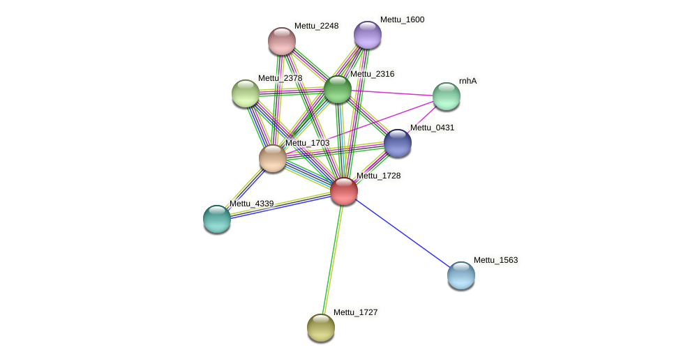 Mettu_1728 protein (Methylobacter tundripaludum) - STRING interaction network