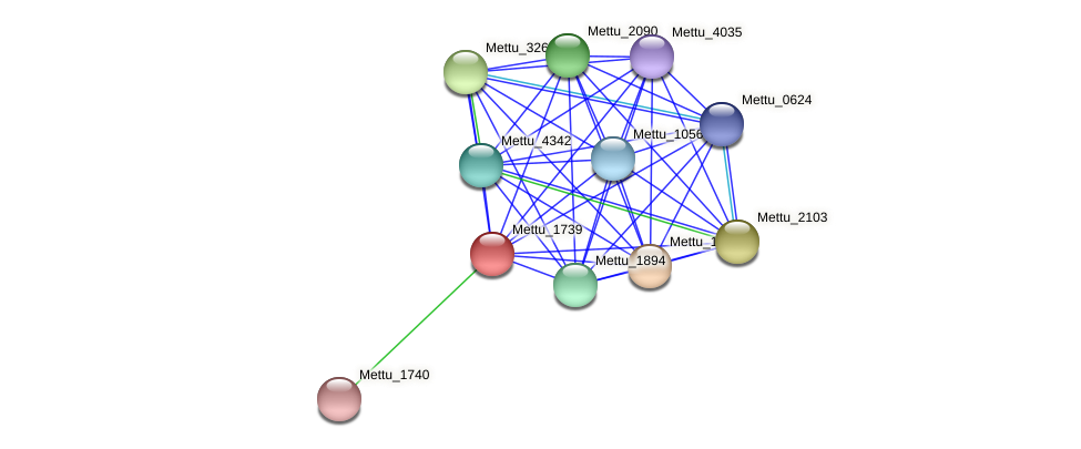 Mettu_1739 protein (Methylobacter tundripaludum) - STRING interaction network