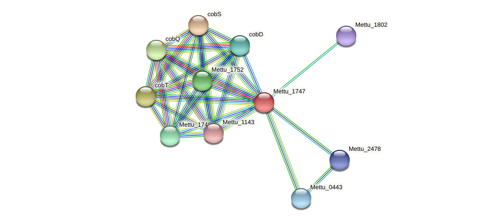 Mettu_1747 protein (Methylobacter tundripaludum) - STRING interaction network
