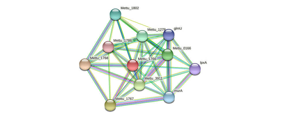 Mettu_1766 protein (Methylobacter tundripaludum) - STRING interaction network