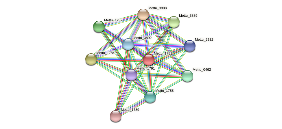 Mettu_1781 protein (Methylobacter tundripaludum) - STRING interaction network