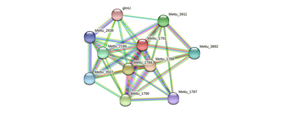 Mettu_1791 protein (Methylobacter tundripaludum) - STRING interaction network
