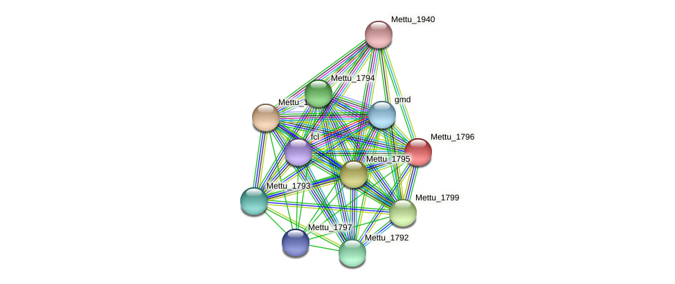 Mettu_1796 protein (Methylobacter tundripaludum) - STRING interaction network