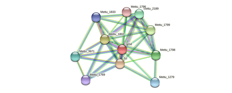 gmd protein (Methylobacter tundripaludum) - STRING interaction network