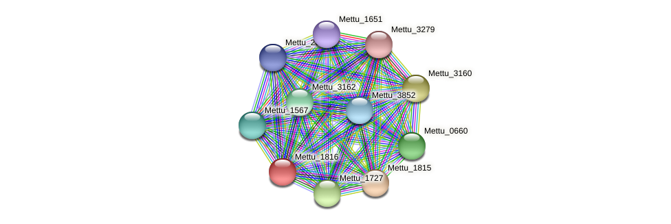Mettu_1816 protein (Methylobacter tundripaludum) - STRING interaction network