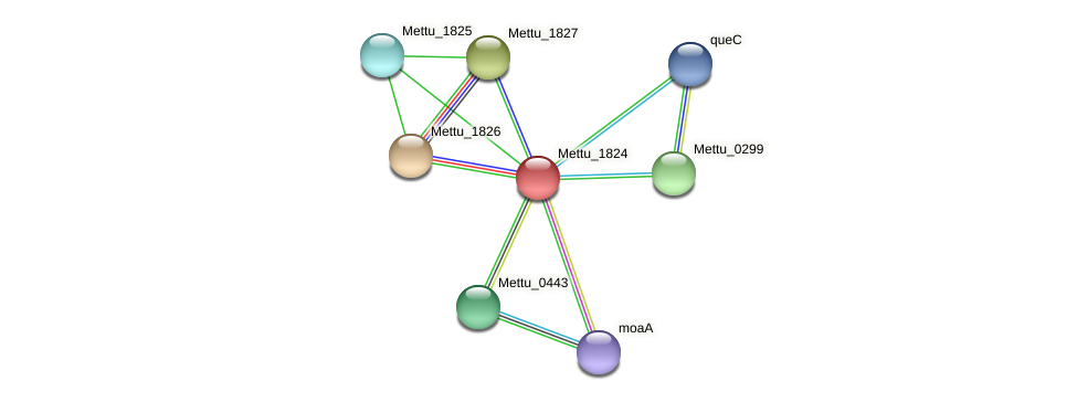 Mettu_1824 protein (Methylobacter tundripaludum) - STRING interaction network